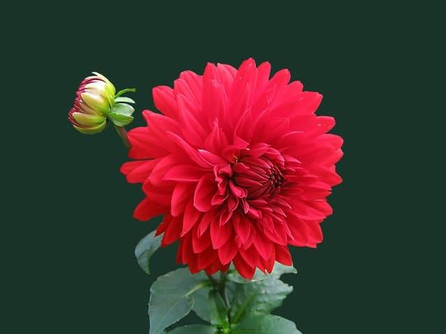 Spanish flowers name