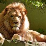 León en inglés